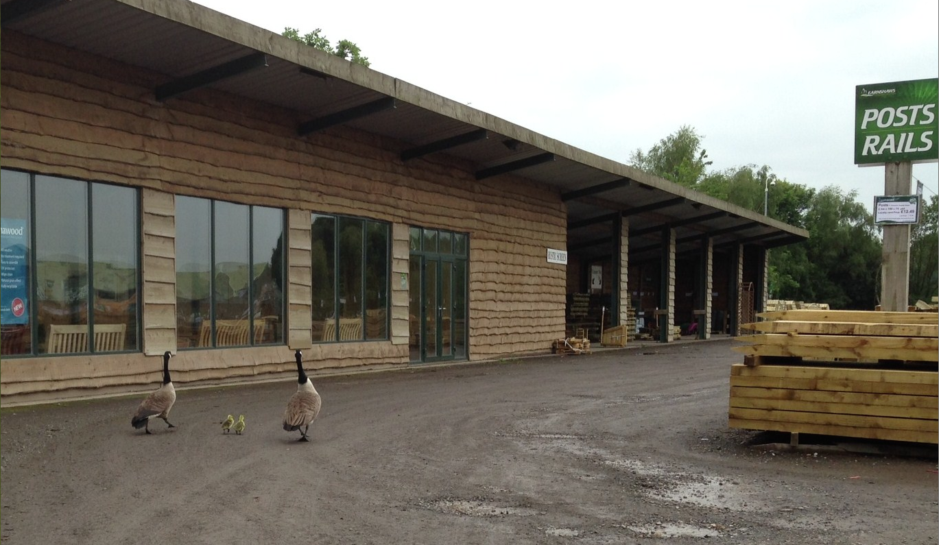 Geese and chicks visit Midgley