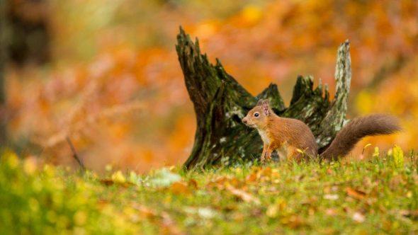 Autumn photograph competition winner