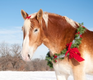 Treat Your Horse This Christmas
