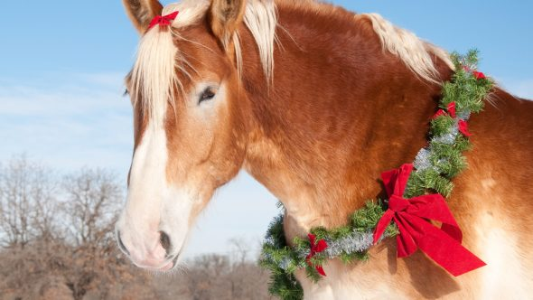 The perfect stocking filler for your pony!