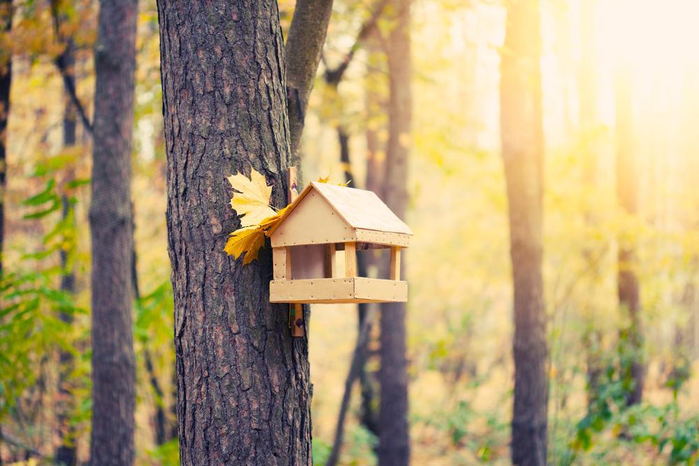 Bird Boxes & Bird Tables