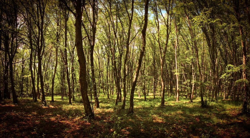 3 Trillion Trees