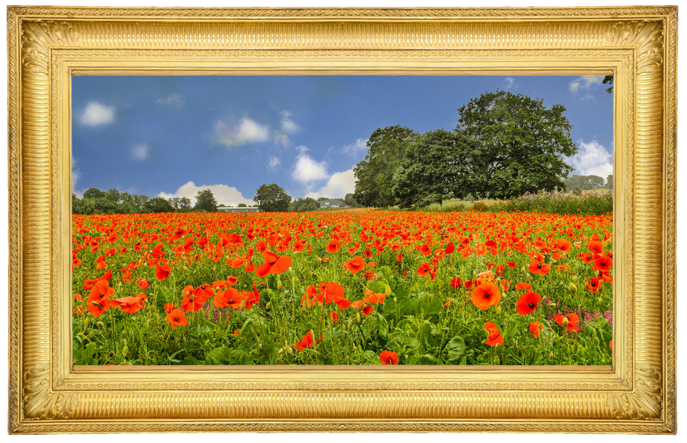 'Poppy Field' by Brian Booth from Huddersfield