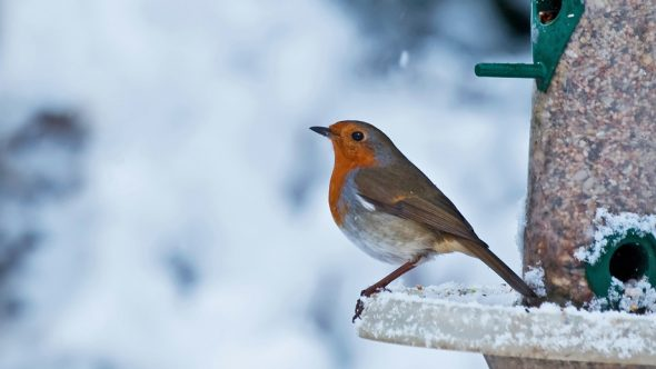 How to feed our feathered friends this winter