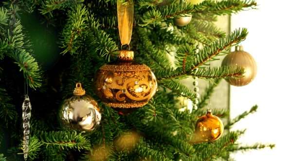 Real Christmas Trees – On Sale Now!