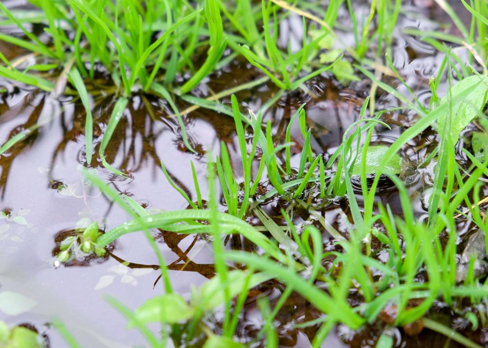 Waterlogged Garden