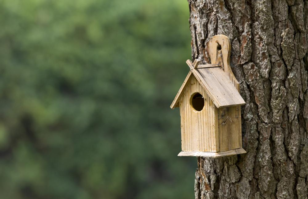 It S National Nest Box Week Get Your Bird Boxes Now
