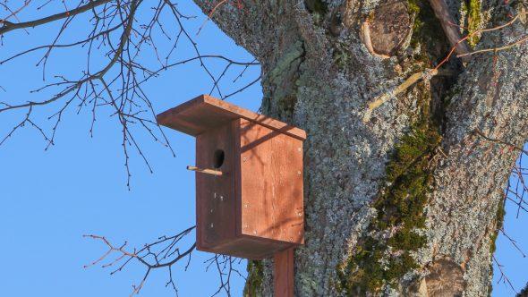 National Nest Box Week!