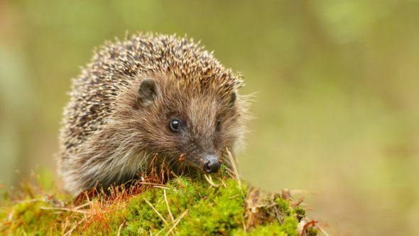 Hedgehog Awareness Week – Free holes with every gravel board!