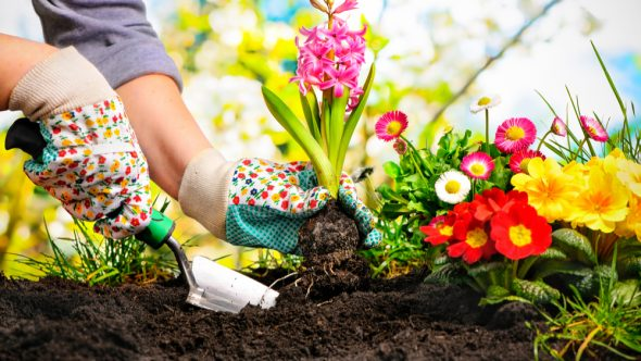Creative Gardening Ideas this Summer