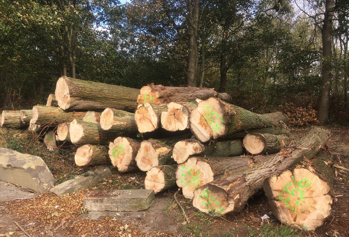 Willow Trees from Midgley for Cricket Bats