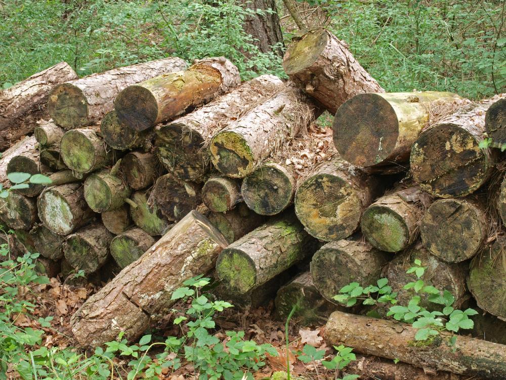 Gardening in November - Log Pile