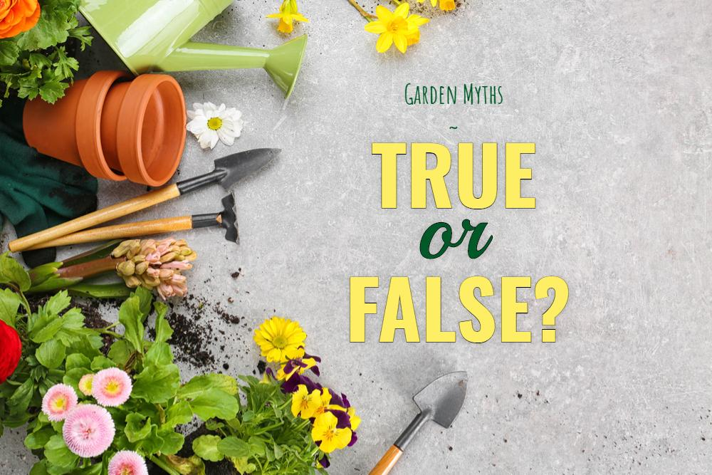 Garden Myths Blog Image