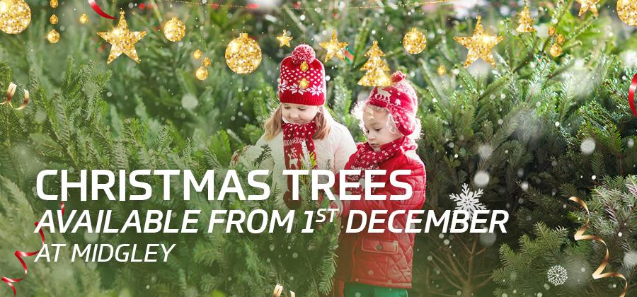 Christmas trees available from 1st December