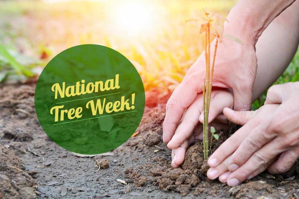 national tree week - Earnshaws Fencing Centre