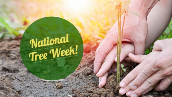 National Tree Week 2018