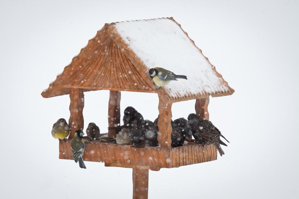 Bird table in snow