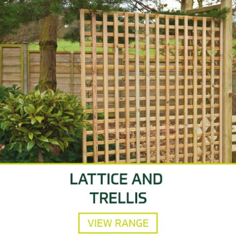 Lattice and Trellis