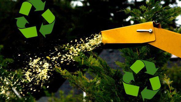 Christmas Treecycling!