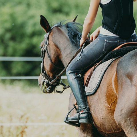 Equestrian at earnshaws fencing centre