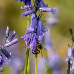 earnshaws fencing centres bee on bluebell
