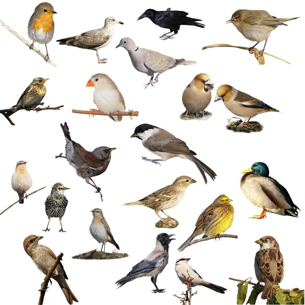 rspp big garden birdwatch earnshaws fencing centres