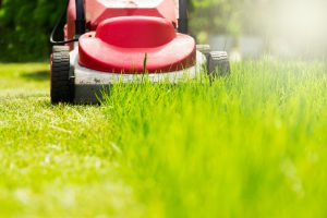 earnshaws fencing centres mowing lawns