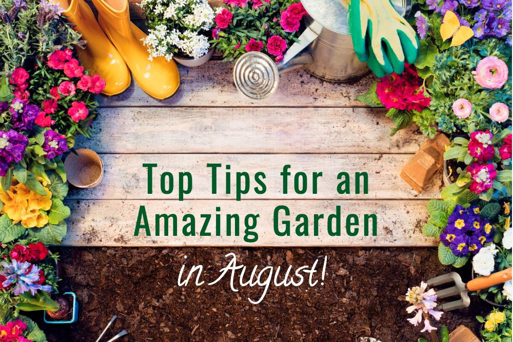 top tips for an august garden