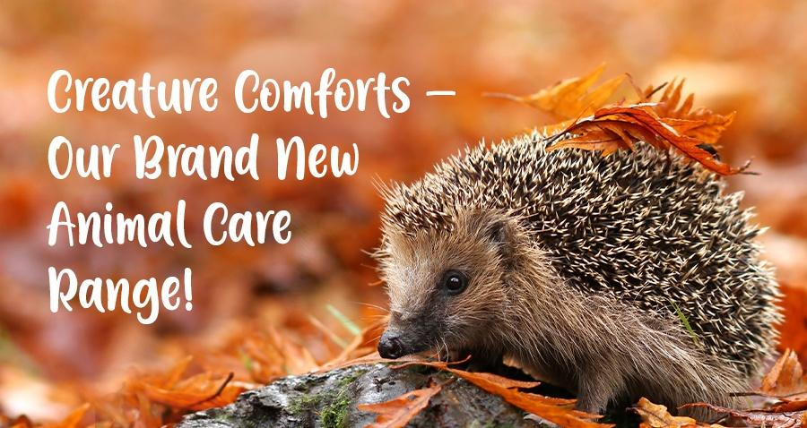 Creature Comforts at Earnshaws
