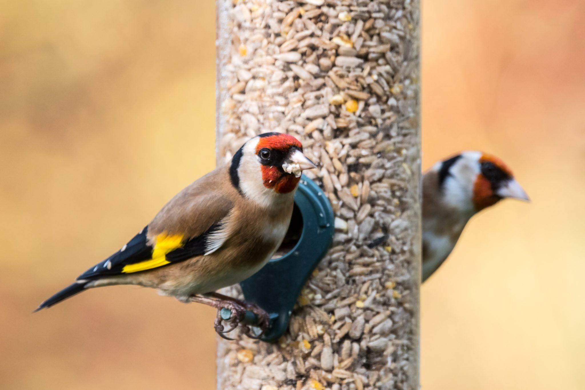 bird feeders, november gardening tips