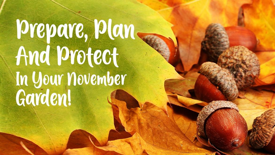 Prepare, Plan and Protect in your November Garden