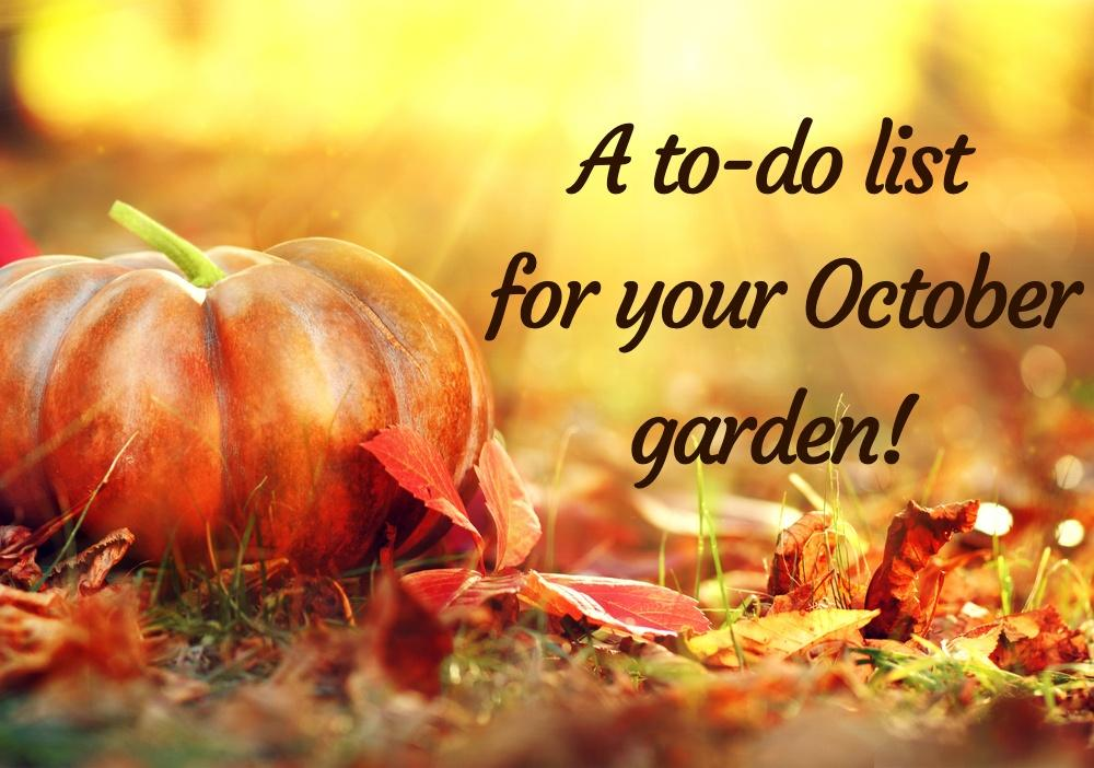A to-do list for your October garden!