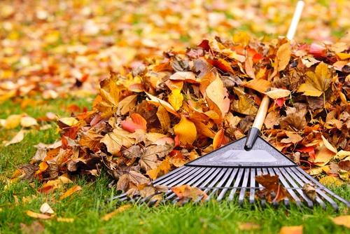 leaf clearing with Earnshaws Fencing Centres