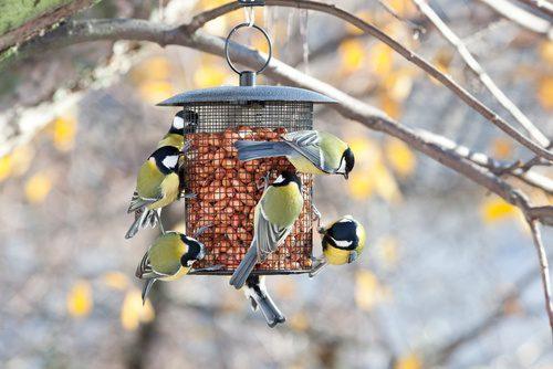 bird feeders with Earnshaws fencing centres