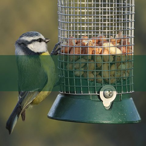Earnshaws Birdfeeders
