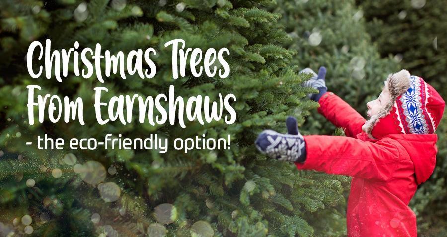 christmas trees from earnshaws