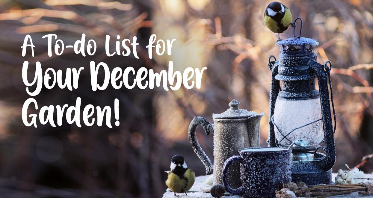 december gardening tasks