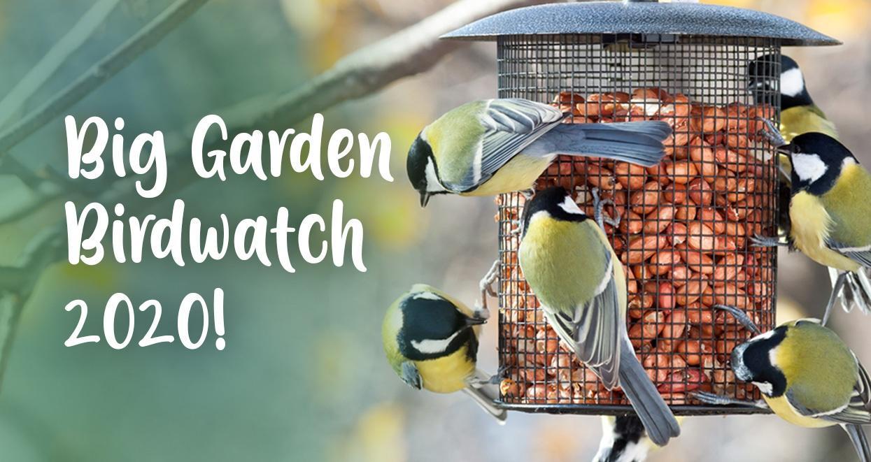 rspb's garden birdwatch