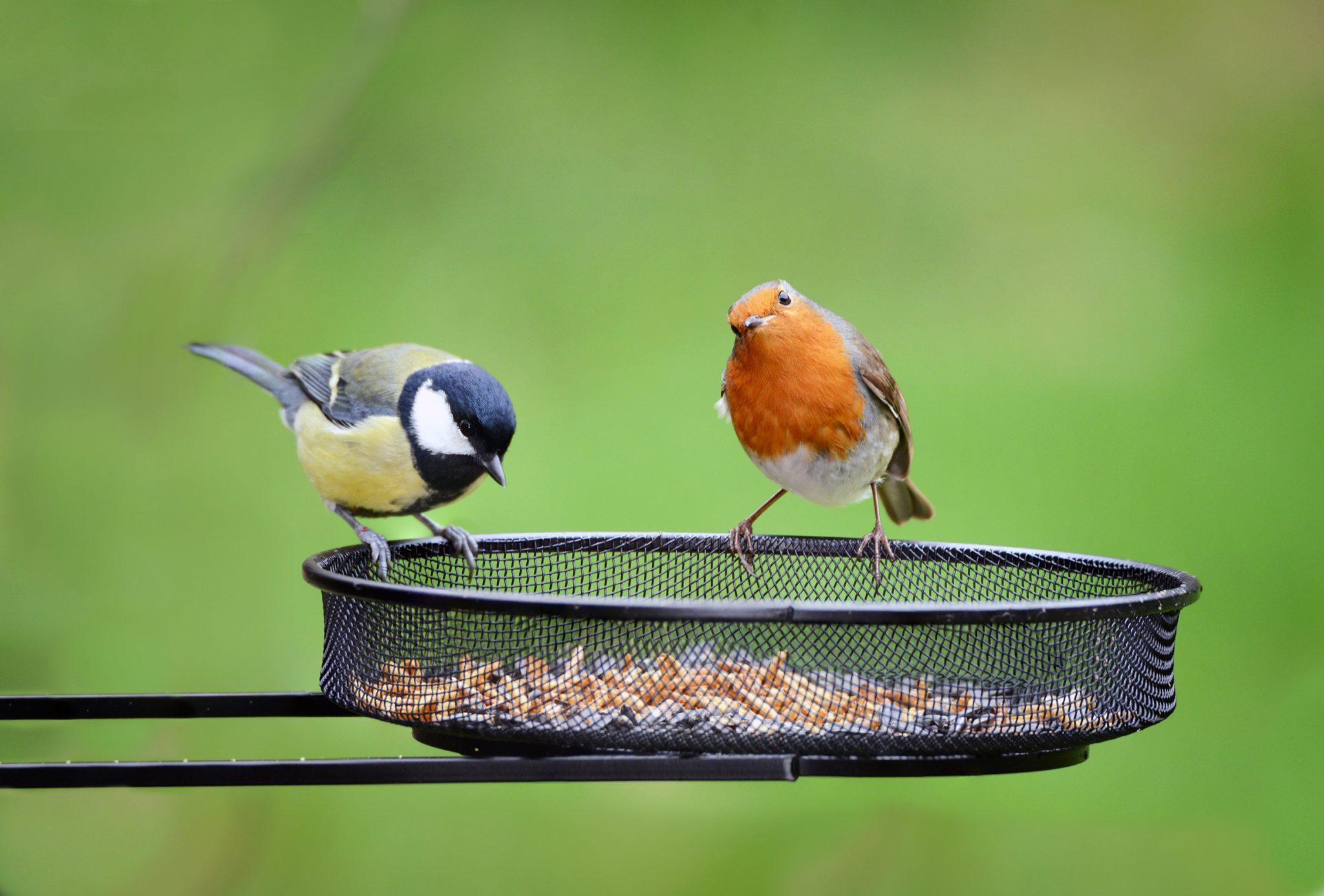 birds on feeder earnshaws
