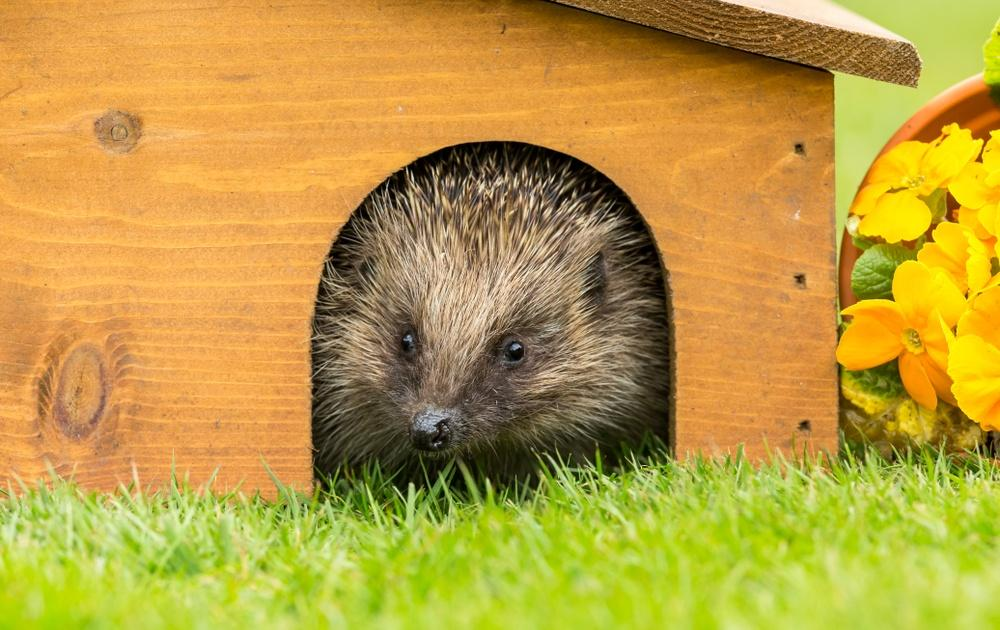hedgehog houses earnshaws