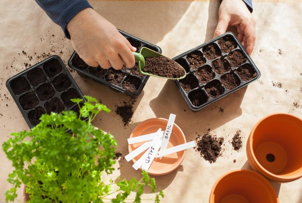 sowing seeds earnshaws