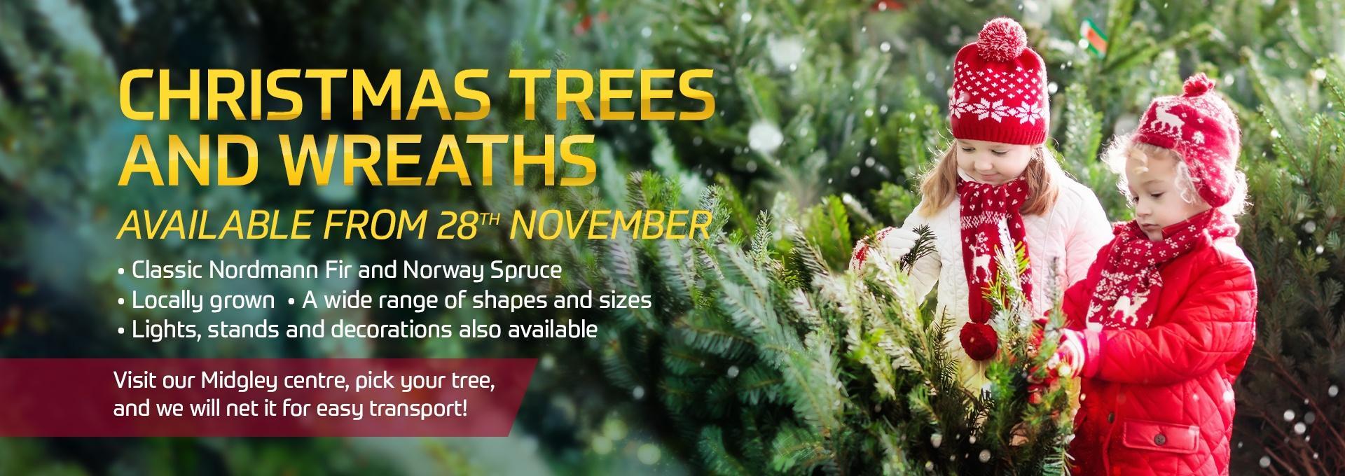 EFC Christmas Trees at Earnshaws
