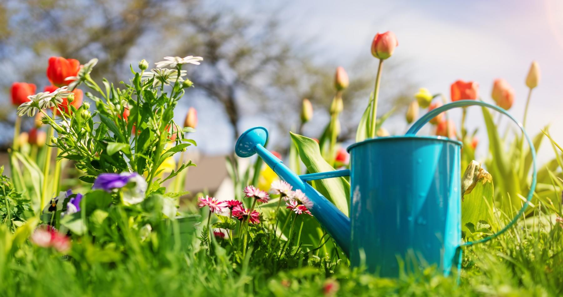 Taking Care of Your Garden in a Heatwave - Top Tips from Earnshaws Fencing Centre