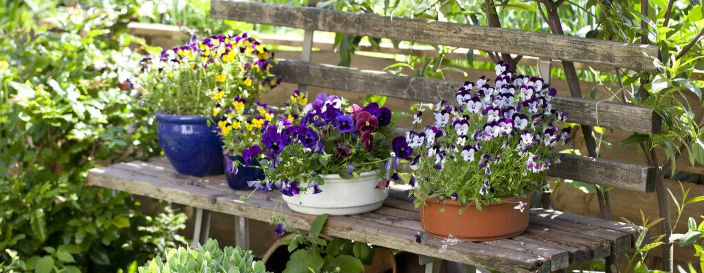 Potted plants in the shade